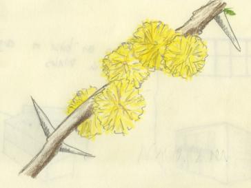 flor del espino